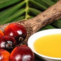 Масло орехов пальмы Ожон